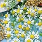 Семена лекарственных цветов