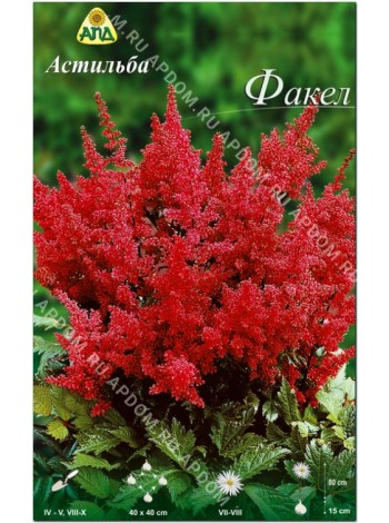 Астильба Факел (Astilbe arendsii Fanal)