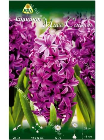 Гиацинт Мисс Сайгон (Hyacinthus Miss Saigon)