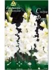 Гладиолус Сноуи Фризл (Gladiolus Snowy Frizzles)