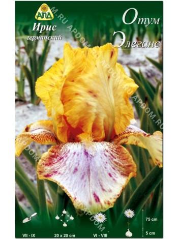 Ирис германский Отум Элеганс (Iris germanica Autumn Elegance)