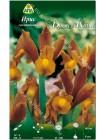 Ирис голландский Бронз Квин (Iris hollandica Bronze Queen)