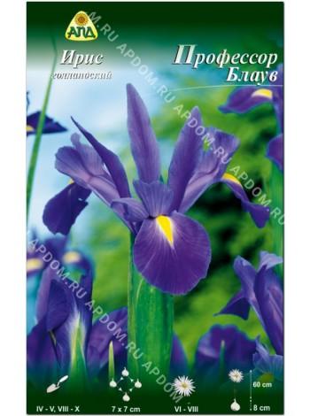 Ирис голландский Профессор Блаув (Iris hollandica Professor Blaauw)