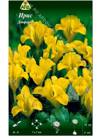 Ирис Дэнфорда (Iris danfordiae)