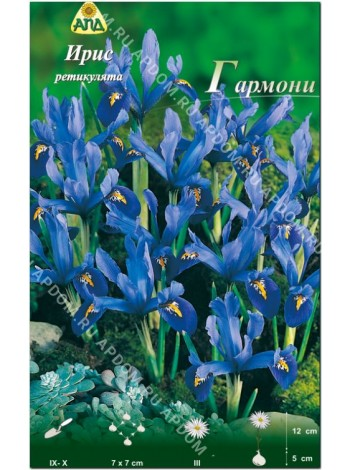 Ирис ретикулята Гармони (Iris reticulata Harmony)