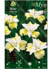 Ирис сибирский Мун Силк (Iris sibirica Moon Silk)