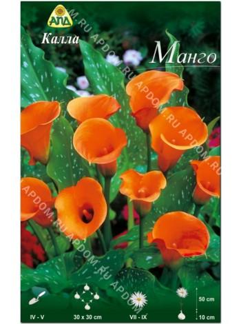 Калла Манго (Zantedeschia Mango)