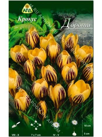 Крокус Дороти (Crocus chrysanthus Dorothy)