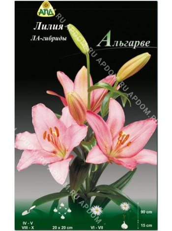 Лилия Альгарве (Lilium LA Algarve)