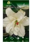 Лилия Анна Мария'c Дрим (Lilium asiatic Annemarie's Dream)
