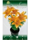 Лилия Голден Матрикс (Lilium asiatic pot Golden Matrix)