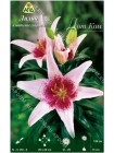 Лилия Дот Ком (Lilium asiatic Dot.Com)