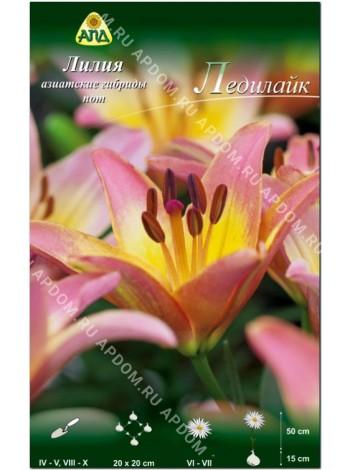 Лилия Ледилайк (Lilium asiatic pot Ladylike)