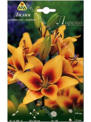 Лилия Лорето (Lilium asiatic Loreto)