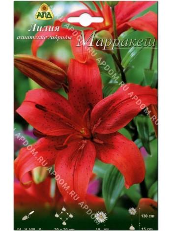 Лилия Марракеш (Lilium asiatic Marrakech)