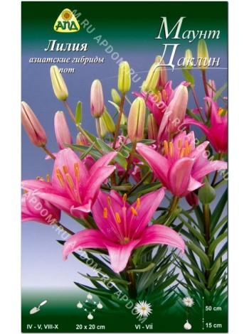 Лилия Маунт Даклин (Lilium asiatic pot Mount Duckling)