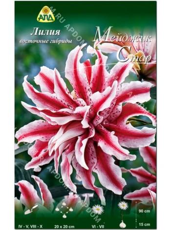Лилия Мейджик Стар (Lilium oriental Magic Star)