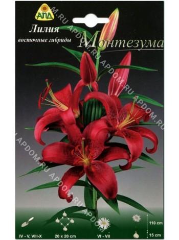 Лилия Монтезума (Lilium oriental Montezuma)