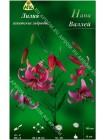 Лилия Напа Валлей (Lilium asiatic Napa Valley)