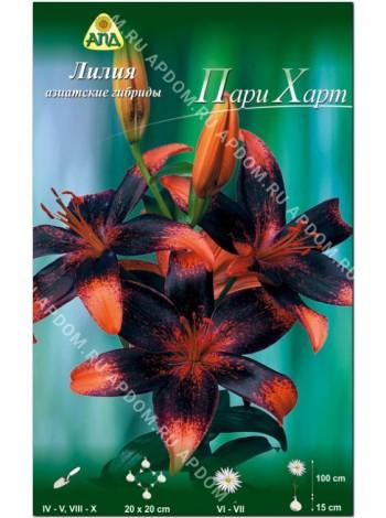 Лилия Пари Харт (Lilium asiatic Paris Heart)