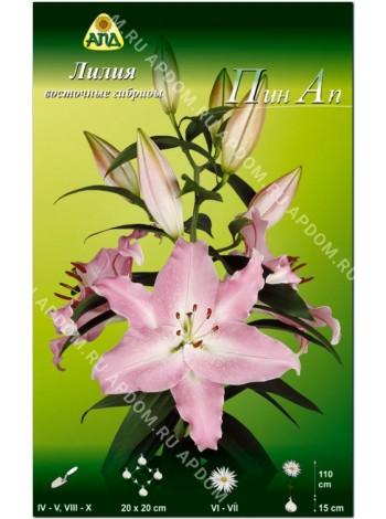 Лилия Пин Ап (Lilium oriental Pinn Up)