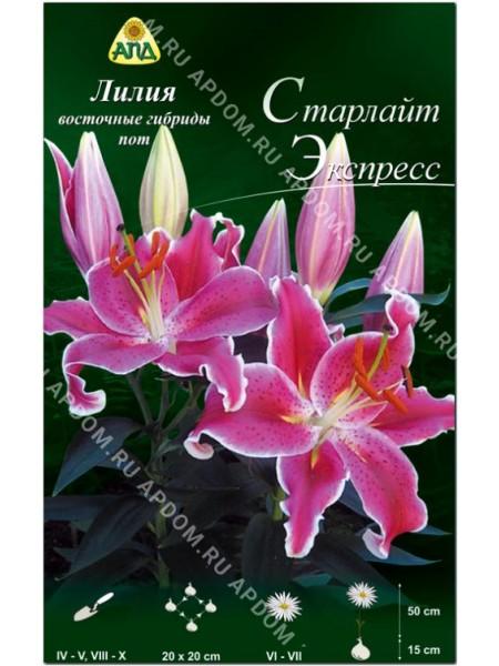 Лилия Старлайт Экспресс