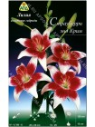 Лилия Страуберри энд Крим (Lilium asiatic Strawberry and Cream)