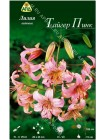 Лилия Тайгер Пинк (Lilium orienpet Tiger Pink)