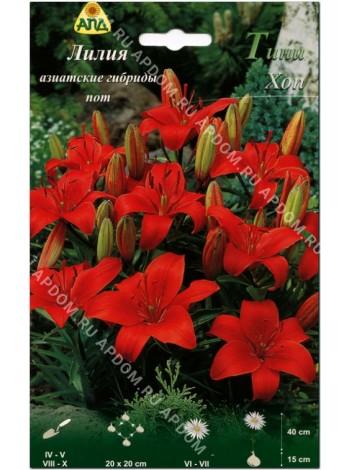 Лилия Тини Хоп (Lilium asiatic pot Tiny Hope)