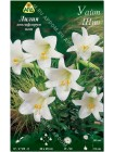 Лилия Уайт Шин (Lilium longiflorum pot White Sheen)