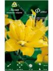 Лилия Фата Моргана (Lilium asiatic Fata Morgana)