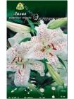 Лилия Экстраваганза (Lilium oriental Extravaganza)
