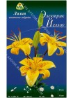 Лилия Электрик Йеллоу (Lilium asiatic Electric Yellow)