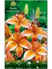 Лилия Электрик Орандж (Lilium asiatic Electric Orange)