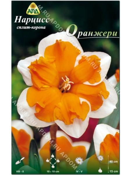 Нарцисс Оранжери