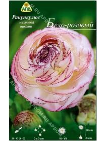 Ранункулюс махровый пикоти Бело-розовый