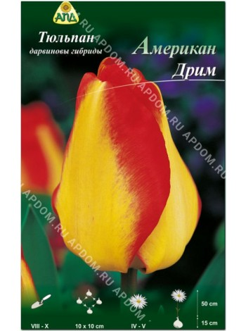 Тюльпан Американ Дрим (Tulipa American Dream)