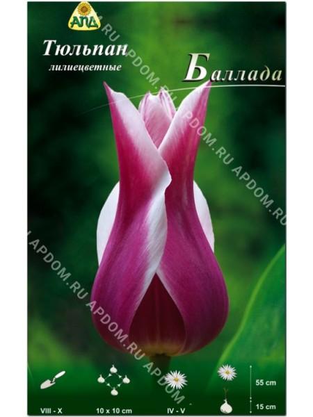 Тюльпан Баллада