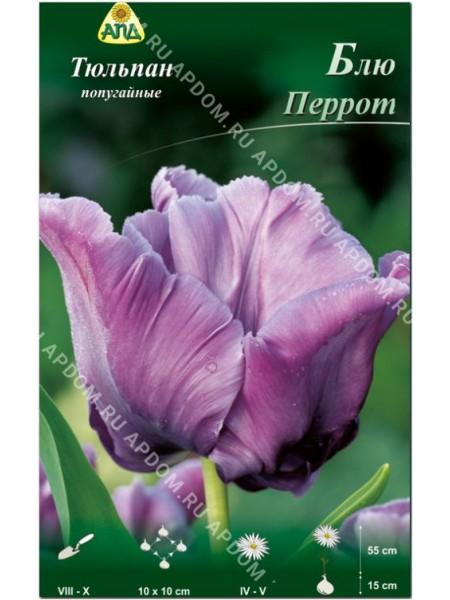 Тюльпан Блю Перрот