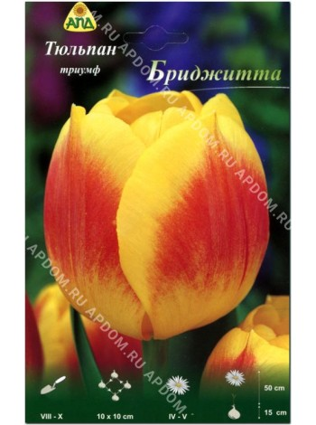Тюльпан Бриджитта (Tulipa Brigitta)
