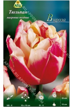 Тюльпан Вироза