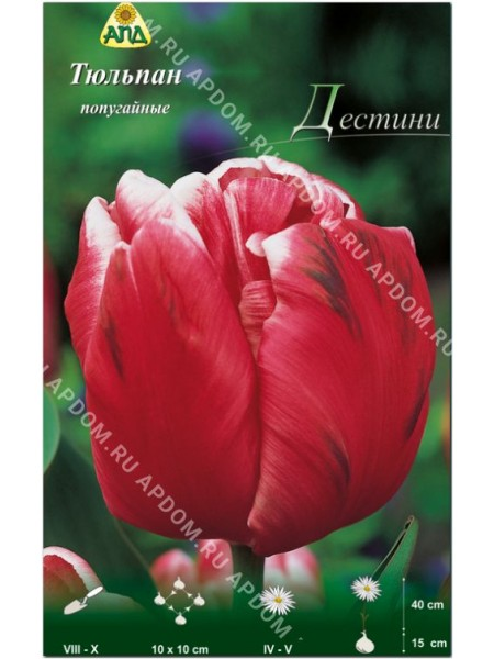 Тюльпан Дестини