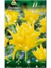 Тюльпан Йеллоу Спайдер (Tulipa Yellow Spider)