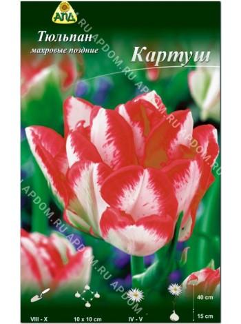 Тюльпан Картуш (Tulipa Cartouche)