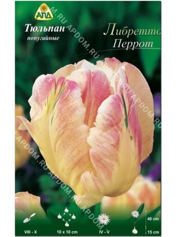 Тюльпан Либретто Перрот (Tulipa Libretto Parrot)