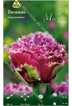 Тюльпан Маскот