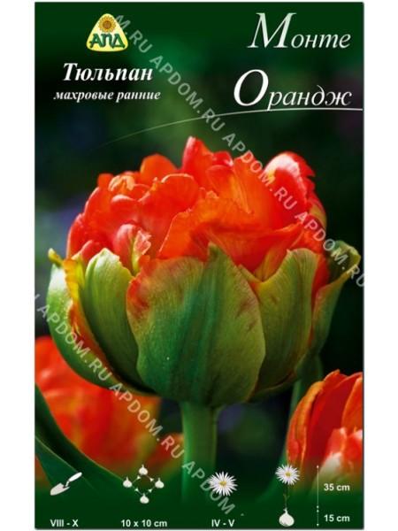 Тюльпан Монте Орандж