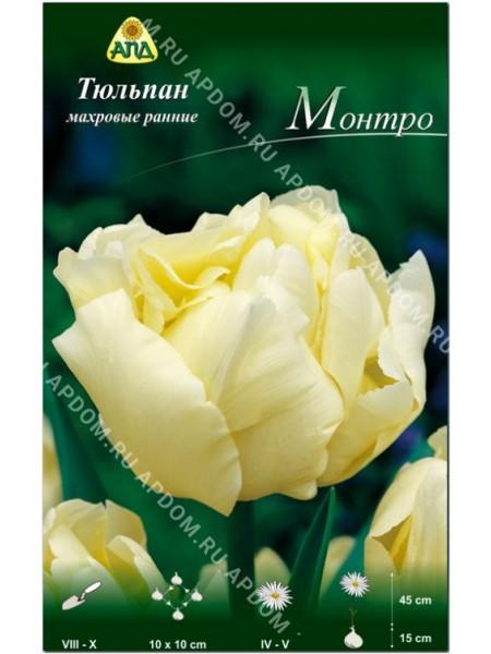 Тюльпан Монтро
