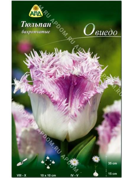 Тюльпан Овиедо