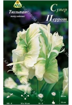 Тюльпан Супер Перрот